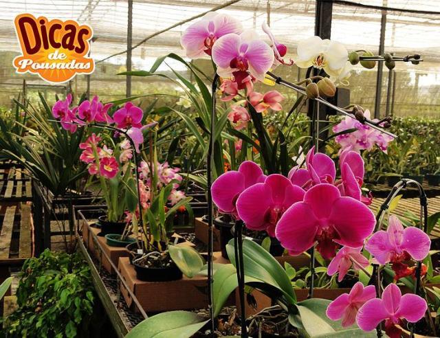 Orquídeas no Orquidário de Guararema